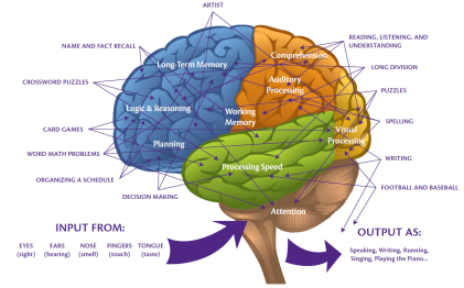 Brain Image for Blog Post EDUC 6115